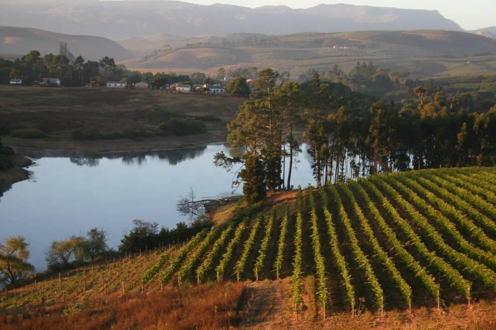 Corder vineyards next to dam