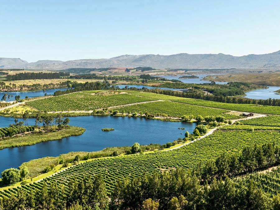 Lothian Vineyards in the Elgin Valley, Western Cape