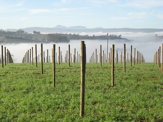 Elgin Ridge vineyards
