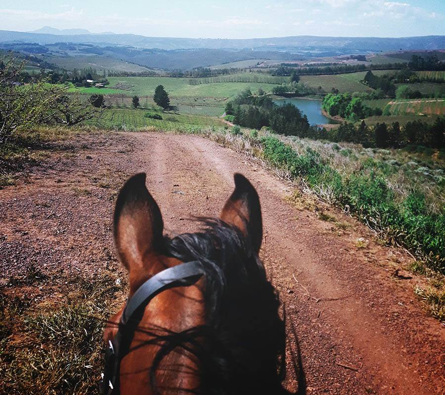 Trail rides tailor made to suit the level of experience