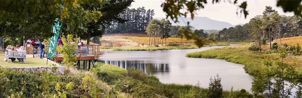 Scenic beauty of Shannon Vineyards