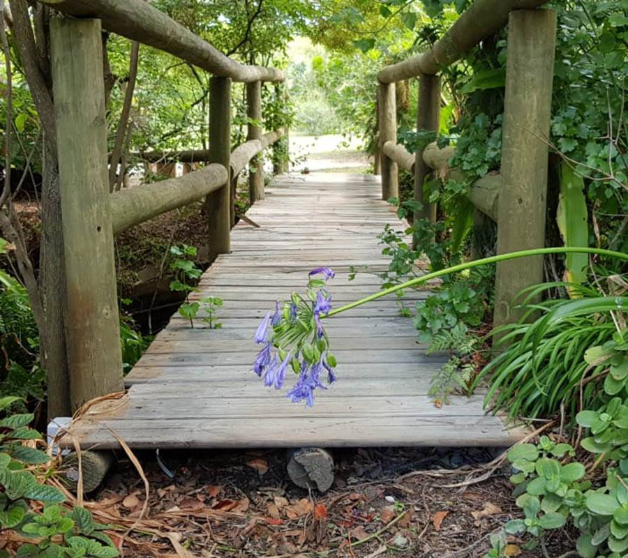 Quaint wooden bridge