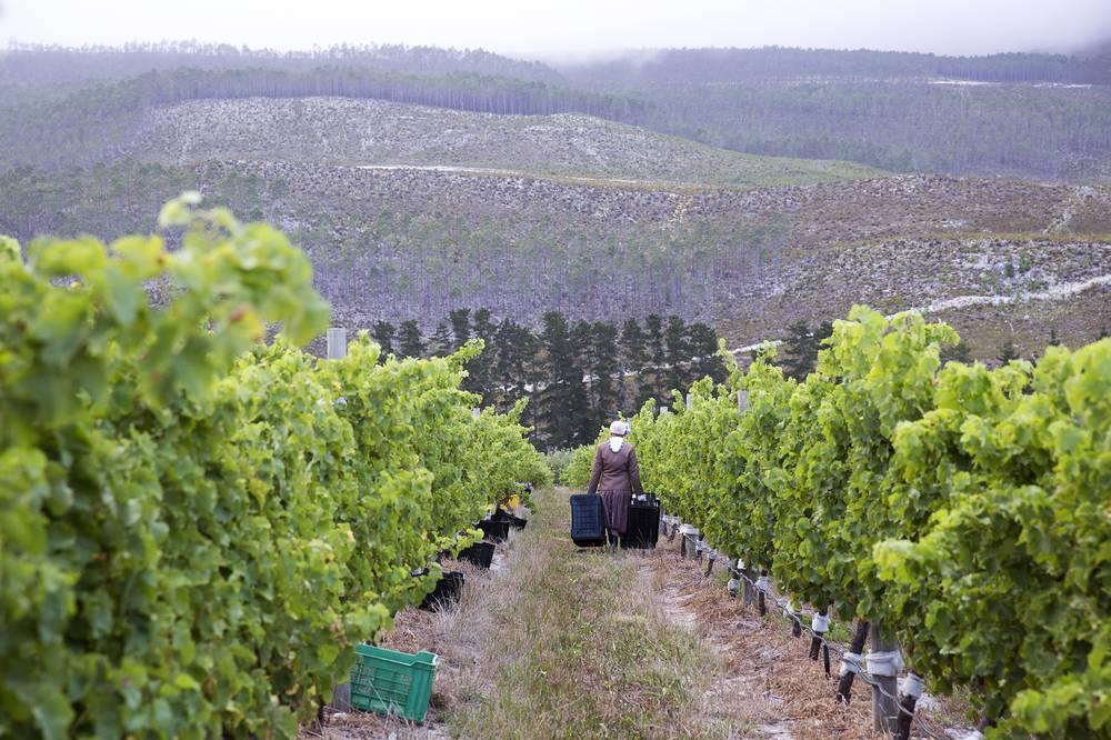 Sloping vineyard