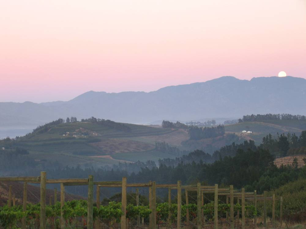 Misty sunrise at South Hill Vineyards