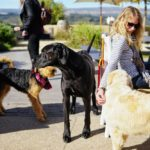 Pets are welcome at selected wine farms