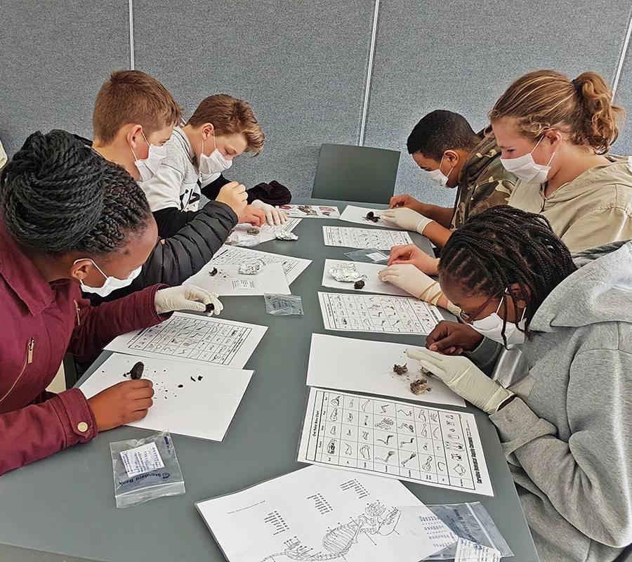 Grade 7 learners