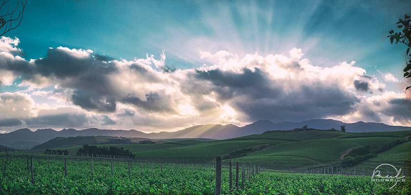 Elgin wine producers take Elgin Valley to Cape Wine 2018