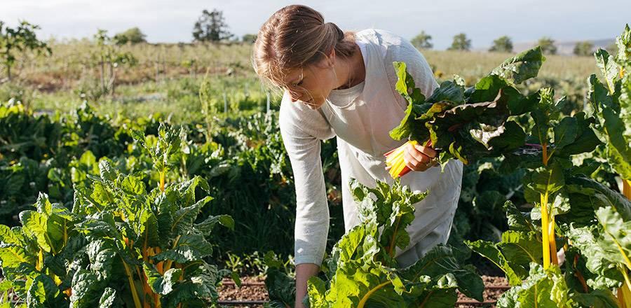 Her Harvest - Organic Vegetable Garden Tours, Fermentation Workshop and Spring lunch