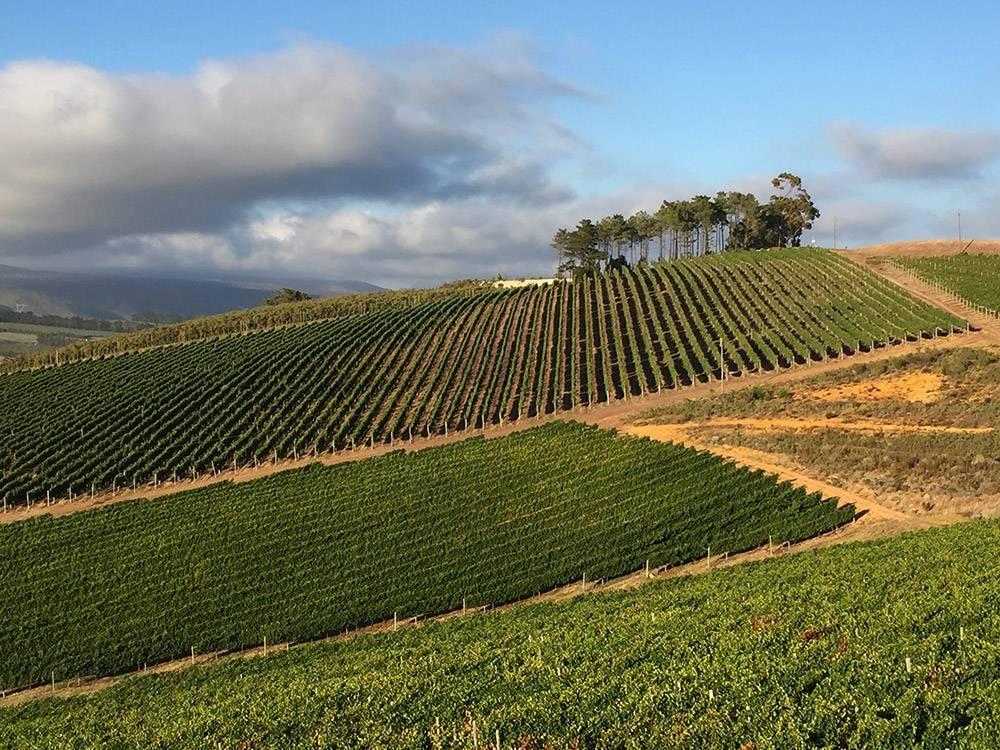 Hills at South Hill Vineyards, Elgin