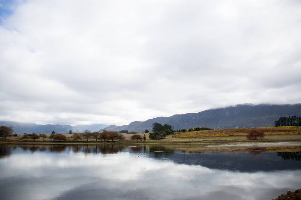 Cool climate reflections