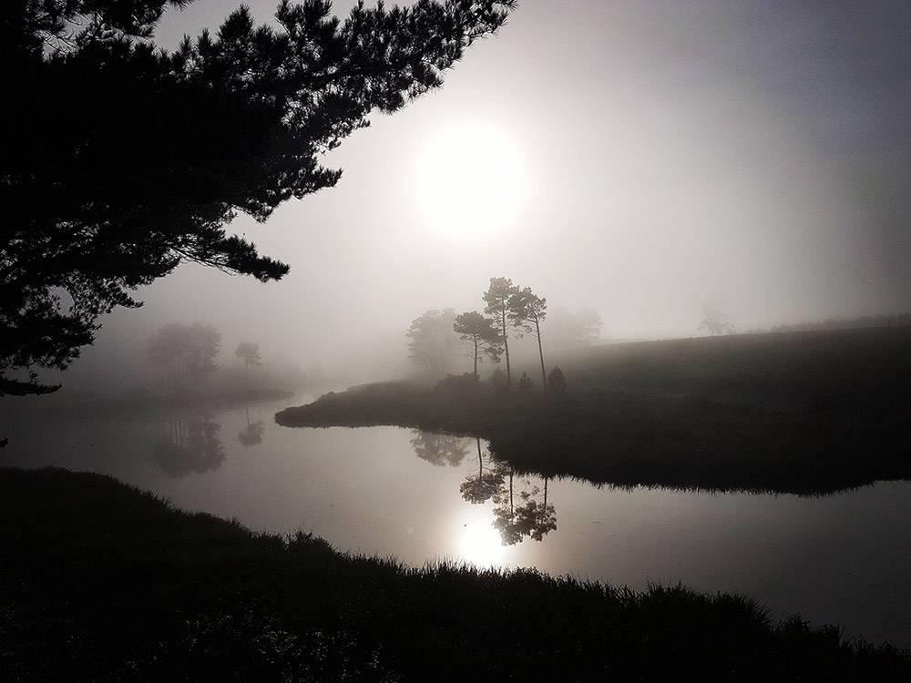Misty morning on Shannon Vineyards