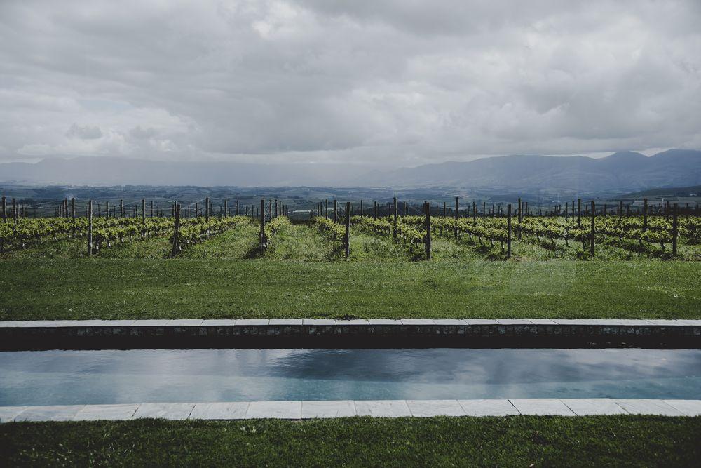 The highest vineyard in the Elgin Valley