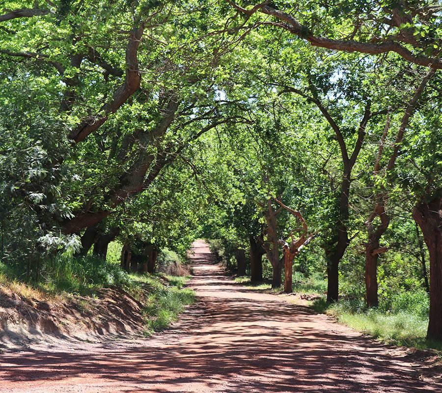 The lane en route to Oak Lane Cottages
